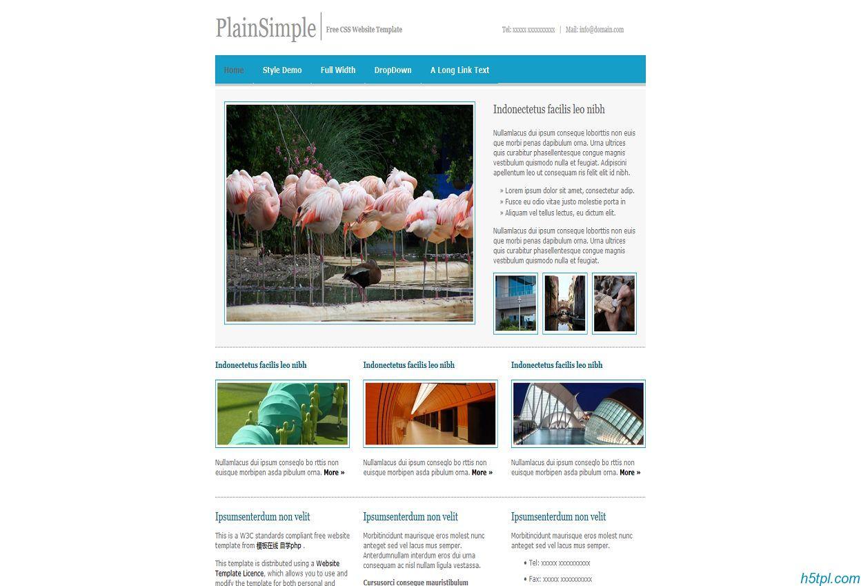 蓝色极简单的动物类网页模板