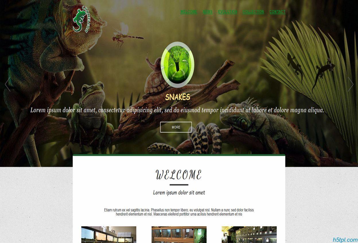 漂亮绿色动物世界专题展示模板
