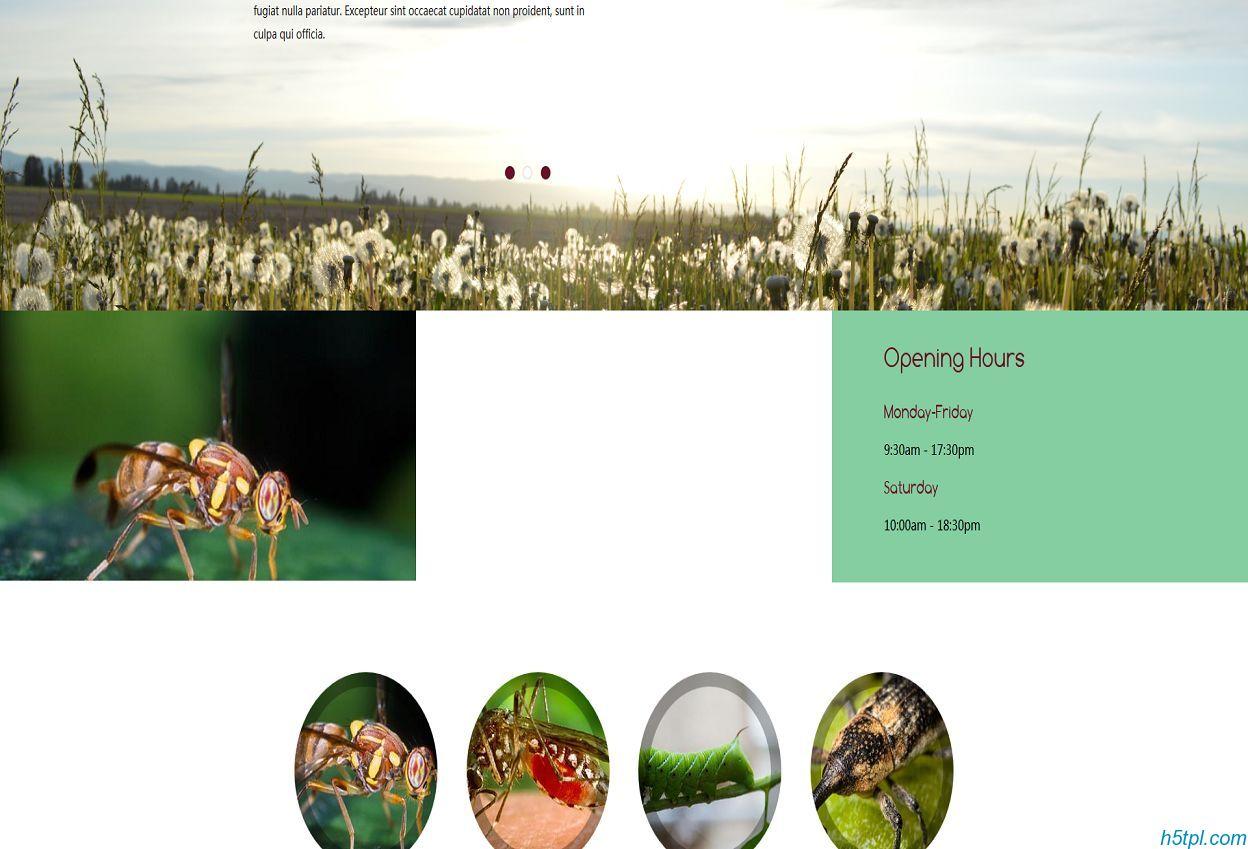 害虫动物HTML5网站模板是一款适合动物植物研究网站模板下载