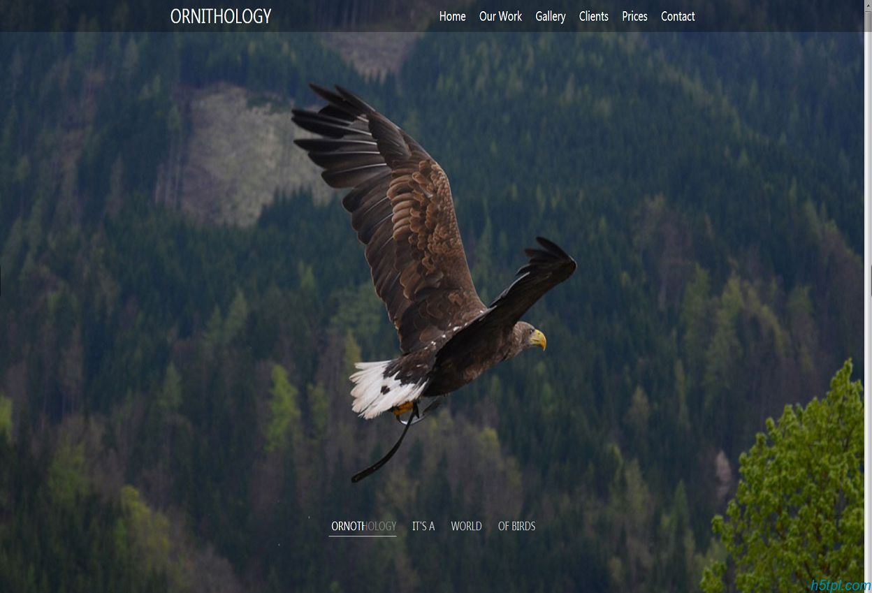 大鹏展翅动物网站模板是一款适合飞禽走兽动物鸟类养殖场网站模板
