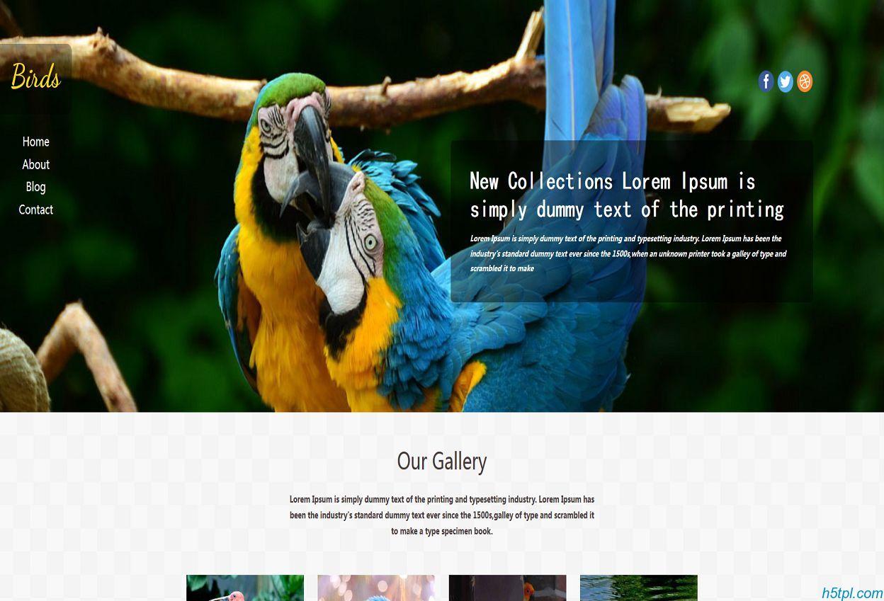 鸟类养殖企业网站模板是一款适合鸟类宠物种类饲养html5网站模板下载