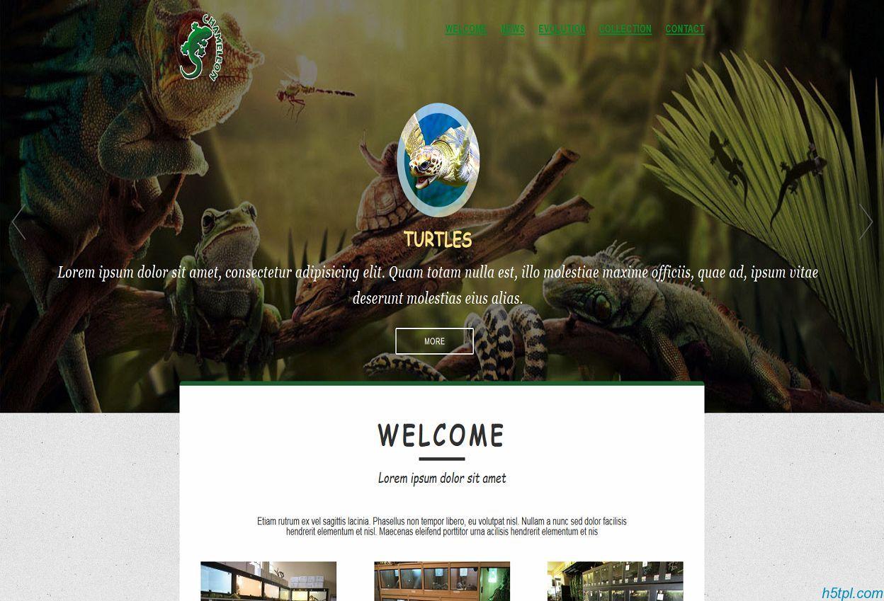 爬行动物html5网页模板是一款绿色风格样式的html5动物标本网站模板