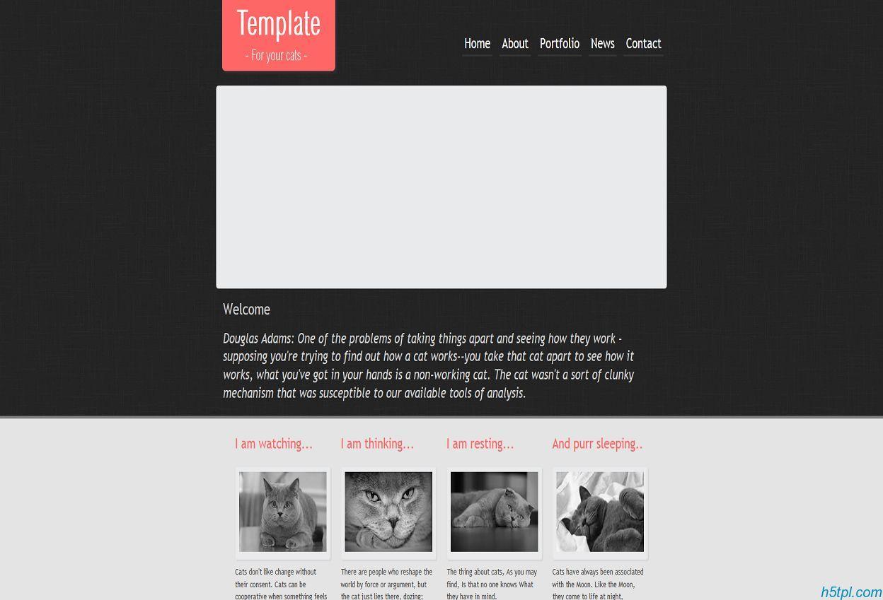 纯色漂亮的宠物猫企业网站模板