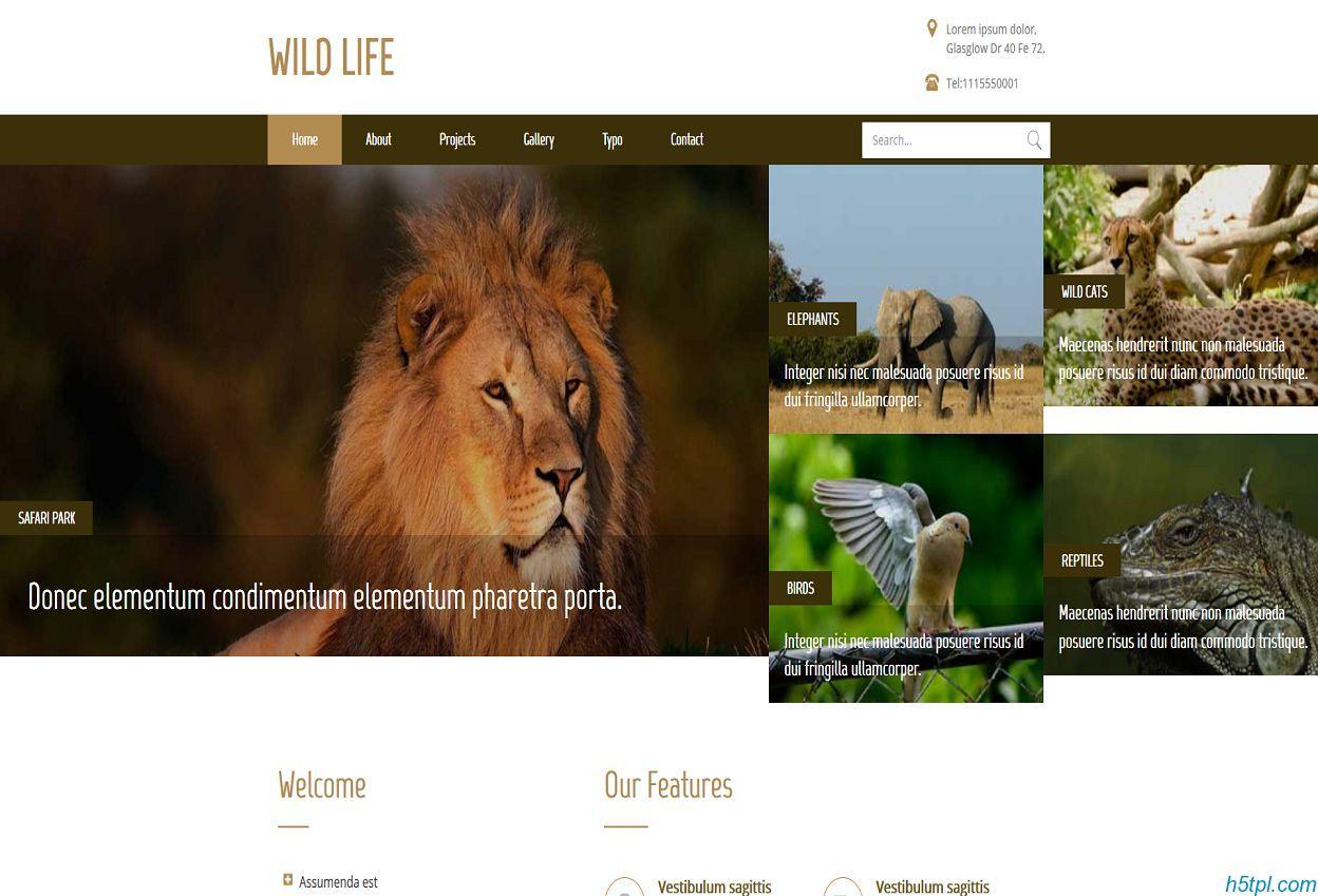 棕色简洁野生动物园bootstrap网站模板