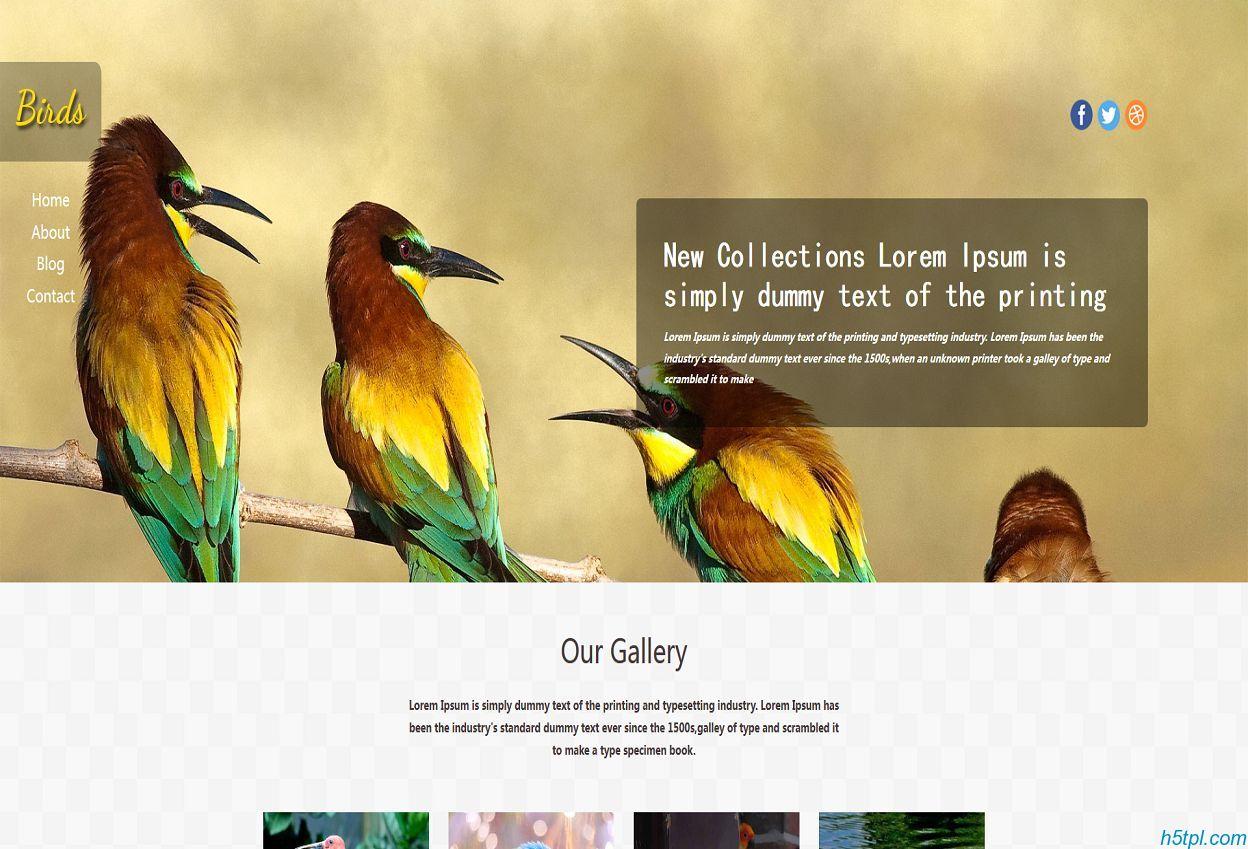 鸟类动物图片展示企业html5模板